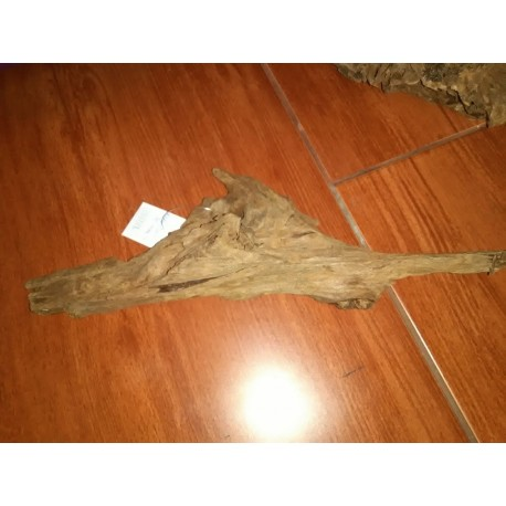 Kořen Jati M